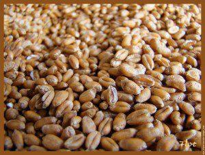 grains-ble