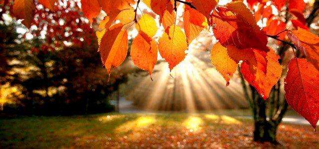 Les inscriptions pour les vacances d'automne sont ouvertes