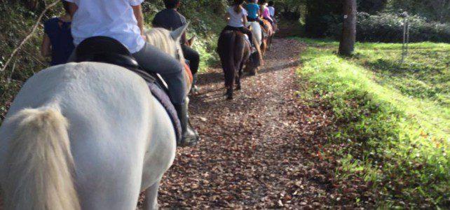 Sortie Équitation