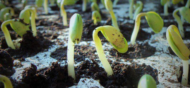 Je sème, tu plantes, nous embellissons….